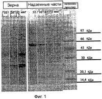 Патент 2526833 Гипоаллергенная дерматологическая композиция